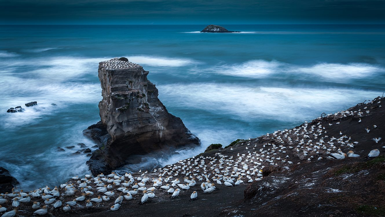 Oceania - NZL - North Island Day 4 - Muriwai